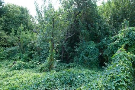 Gartendickicht, August 2008